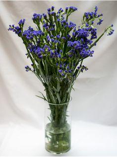 Лимониум синий (Blue Limonium)
