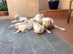 Mamma che allatta i suoi cuccioli