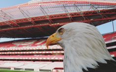 """29.5 m Gostos, 101 Comentários - Sport Lisboa e Benfica Oficial (@slbenfica) no Instagram: """"Focados na próxima final, sexta-feira contamos contigo! #VamosBenfica"""""""