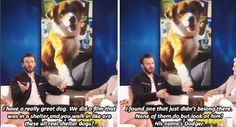 Chris Evans about his dog Dodger