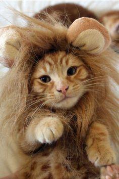 Rawr I'm a lion