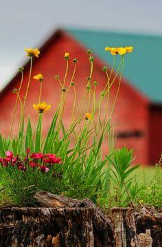 Colorful Farm