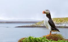 Photography Week Photo of the Day- Puffin Landscape by Richard Steel