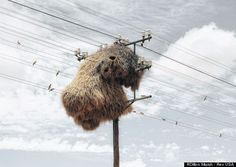 World's Largest #BirdNests: Photographer Dillon Marsh Snaps Social Weaver Homes In South Africa (PHOTOS)