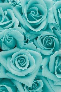Tiffany blue roses!