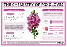 The vibrancy of foxgloves belies their poisonous nature – ingesting even a small amount of the plant can cause unpleasant effects, and in some cases death. However, the same compounds that make it …