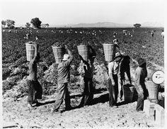 Pea pickers; Dorothea Lange; 1939