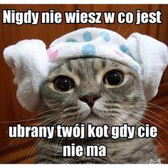 #smieszne #sucharcodzienny #suchar #skarpetki #koty #kot #cat #cats
