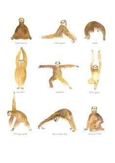 For more fitness and yoga sloths, check out our website: http://all-things-sloth.com/sloth-pictures/