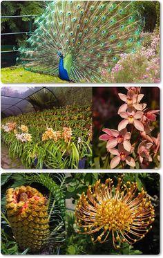 Jardim Tropical Monte Palace - Ilha da Madeira