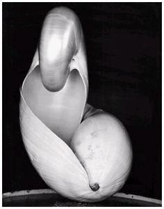 Edward Weston # www.edwardweston.com