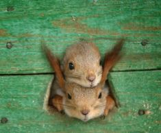 cutes.