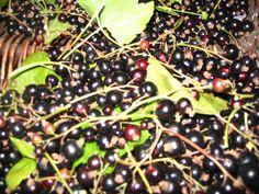Blackcurrent scnapps