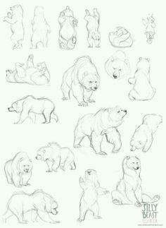 Bear sketch: art study (drawing not mine, credits to original artist!)