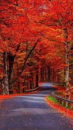 Follow the Autumn Road