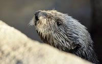 Webcams and other activities from the Monterey Bay Aquarium
