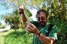 Green Deane, the the most watched Forager in the world. Eat the Weeds and other things too! Wild edible Plants expert and instructor.