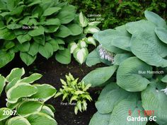 Garden6C2007pic1.jpg Photo:  This Photo was uploaded by Papou. Find other Garden6C2007pic1.jpg pictures and photos or upload your own with Photobucket fr...