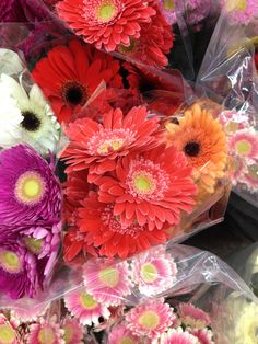 market (coral gerberas in the middle)