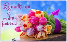 flower computer wallpaper backgrounds by Wilden Edwards
