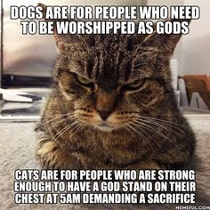 Dogs and cats are life - 9GAG