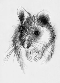 Mouse, Artist Sean Briggs producing a sketch a day, prints available at https://www.etsy.com/uk/shop/SketchyLife #art #drawing #http://etsy.me/1rARc0J #mouse