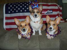 The Daily Corgi: Go Team USA -- Corgi Style!
