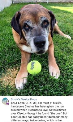 3/13/17 HOW CAN ANYONE FAIL THIS BEAUTYFUL BOY? OVER AND OVER AGAIN? MY HEART ACHES FOR HIM PLEASE SHARE CLEETUS HELPING HIM FIND TRUE EVERLASTING LOVE AND COMMITTMENT ❤️❤️ /ij https://m.facebook.com/susiesseniordogs/photos/a.272358689587441.1073741828.272349689588341/804151936408111/?type=3&source=48&__tn__=E
