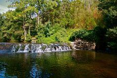 Práticas amigas do ambiente na gestão de eucaliptais beneficia os rios – estudo | Médio Tejo