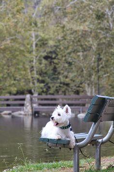 The White Dog Blog: Wordless Wednesday