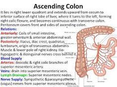 bildergebnis für ascending colon   ascending colon   pinterest, Human Body