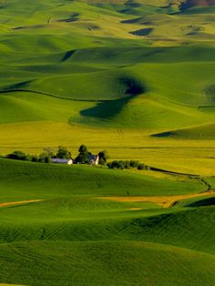 Rolling Green Hills of Spring Crops, Palouse, Washington