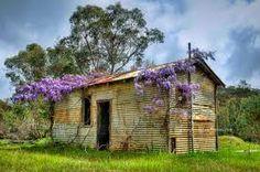 New Norcia, Western Australia Australian Sheds, Australian Flowers, Western Photo, Wisteria, Western Australia, Cabin, Photoshoot, Rustic, House Styles