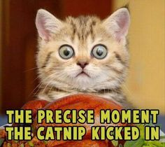 Funny Animal Pictures Of The Day � 22 Pics