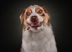 Christian Vieler is a talented 46-year-old animal and pet photographer and journalist based in Waltrop, Germany. Christan has been shooting amusing photos of dogs for the past four years. Vieler is…
