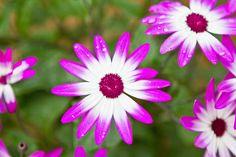 Flower by willp0rter, via Flickr