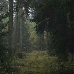 #märchenwald