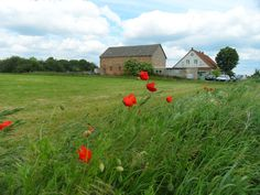 Rural scene in north-eastern Germany, between the towns of Prenzlau and Pasewalk. Frequently one sees poppies as in this scene along the country roads.