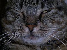"""My cat """"Imma"""""""