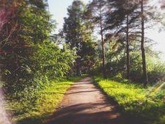 "reverie.walker: ""#пейзаж #природа #осень  #холод #грусть #печаль #одиночество #landscape #nature #autumn #fall  #evening #twilight #snow #town #sity #cold #sadness #loneliness #путешествие #прогулка #walk #journey #forest #лес"""