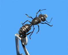 A fishable realistic foam ant that's not too hard to tye (Sergei Utkin)