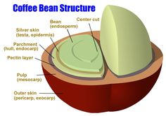 Whole Bean Coffee. Individuals who love coffee their very own choices while purchasing it. Some decide to buy grounded coffee although some others prefer