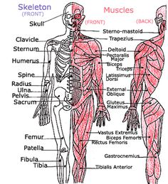 We made up rhymes to help me memorize all the bones and muscles in the body when I was four.