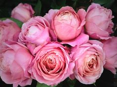 Romantic Antike garden rose. I think this rose perfectly matches the dusty pink in your mood board