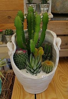 (notitle) suculentas y cactus Indoor Plants, Mini Garden, Plants, Diy Plants, Planting Flowers, Succulent Garden Outdoor, Cactus House Plants, Succulent Garden Diy, Succulent Garden Indoor