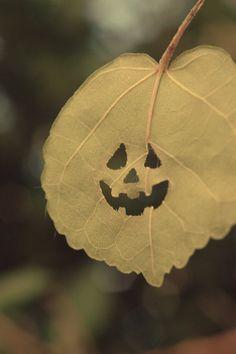 Trick or Treating leaf