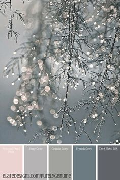 coole Bilder Winter personality shines particularly well! Kerstin Tomancok / color, type, style & im Palettes Color, Winter Color Palettes, Grey Living Room Ideas Colour Palettes, Blush Color Palette, Grey Palette, Pale Dogwood, Orquideas Cymbidium, Colour Board, Paint Schemes