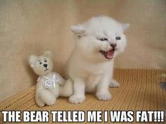 The bear telled me I was fat!!!