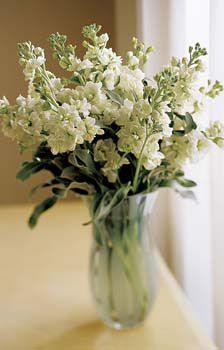 Want your bouquet to smell like heaven? Have the florist fill it with Stock. It comes in lots of colors and smells fantastic. I don't think there is a better smell than stock and roses!