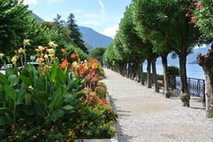 Promenade Bellagio Sidewalk, Plants, Italy, Flora, Plant, Pavement, Curb Appeal